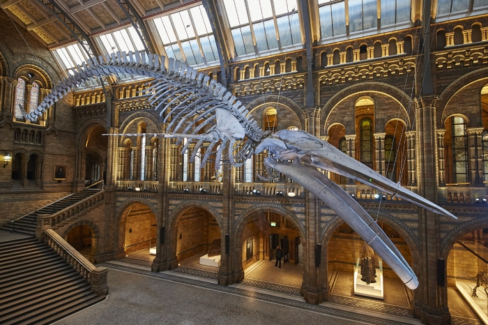 whale-skeleton-natural-history-museum-1